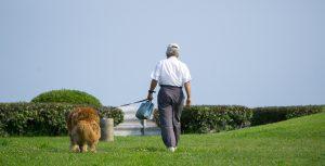 iTUSMOを着けて犬のお散歩